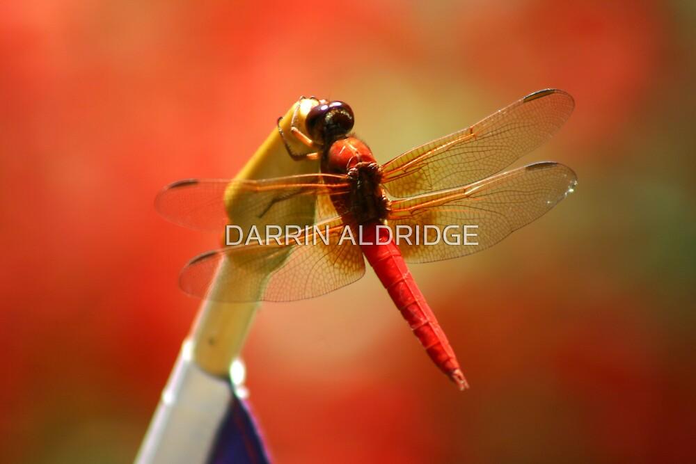 Red Patriot by DARRIN ALDRIDGE