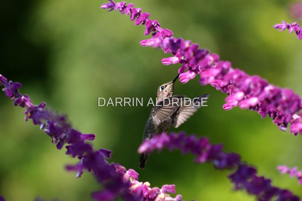 Praying on Pink by DARRIN ALDRIDGE