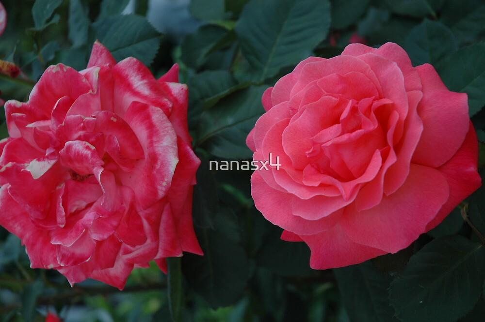 rose by nanasx4