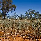 Shrubs of the Outback by MagnusAgren