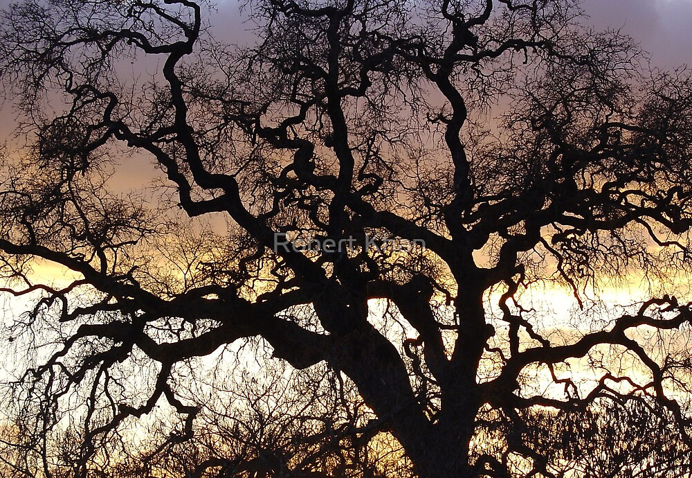 Living Tree by Robert Khan