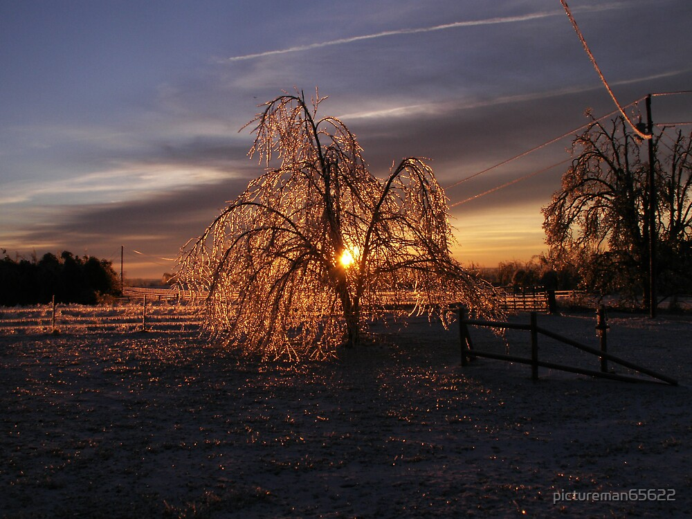 ice storm 2007 8 by pictureman65622