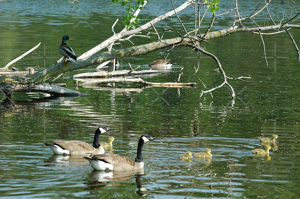 Family Outing by Holly Werner