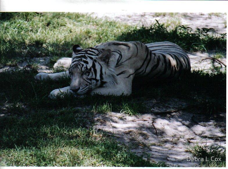A Lazy Tiger by Debra L Cox
