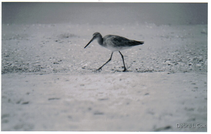 A Beach Birds Walk by Debra L Cox