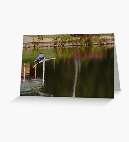 Flying Over The Pond Greeting Card