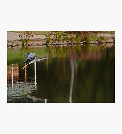 Flying Over The Pond Photographic Print