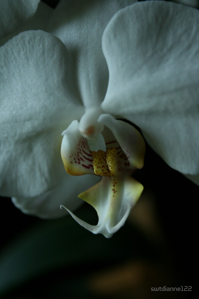 orchid by swtdianne122