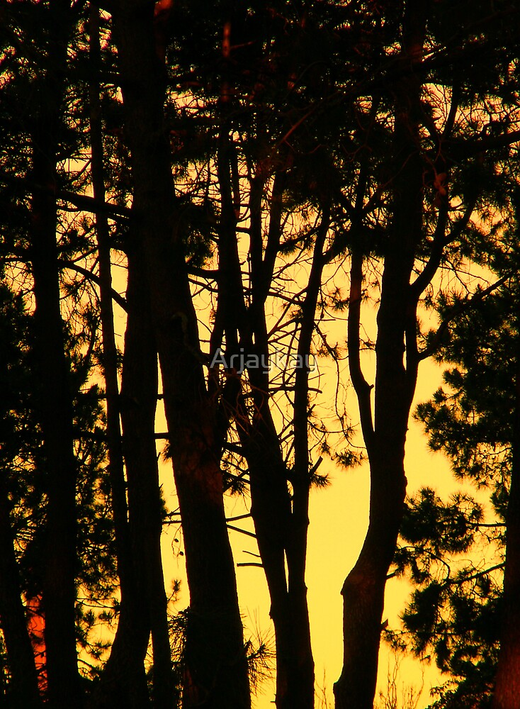Out of the Trees by Robert Knapman