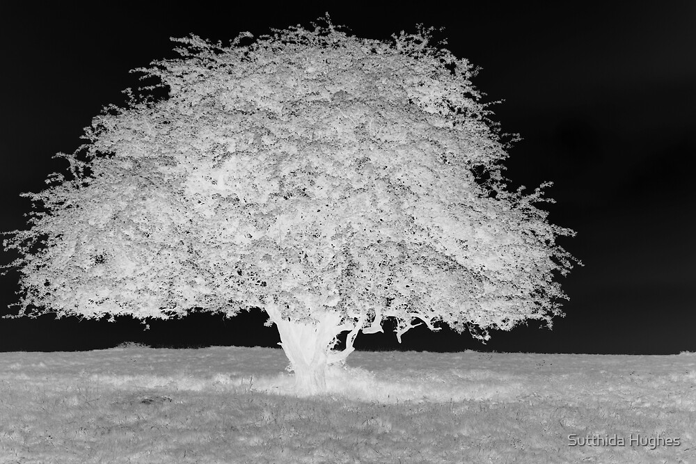 The White Tree by Sutthida Hughes