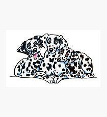 Dalmatiner Trio Fotodruck