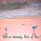 Two Seagulls with 'Interesting Point of View' by Cathie Sherwood