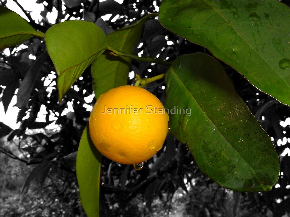 Lonely orange on tree by Jennifer Standing