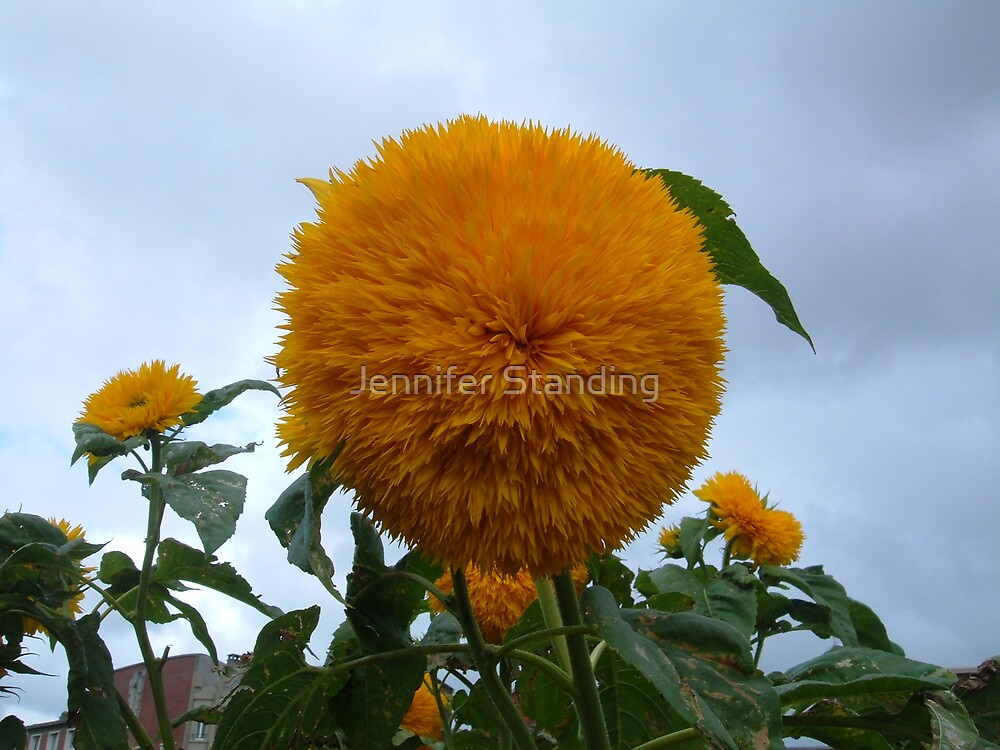 Yellow Flower by Jennifer Standing
