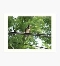 Blue Jay On A Wire Art Print