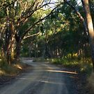 Old Bush Road by Damian M Photographer