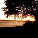 dark tree by beejay