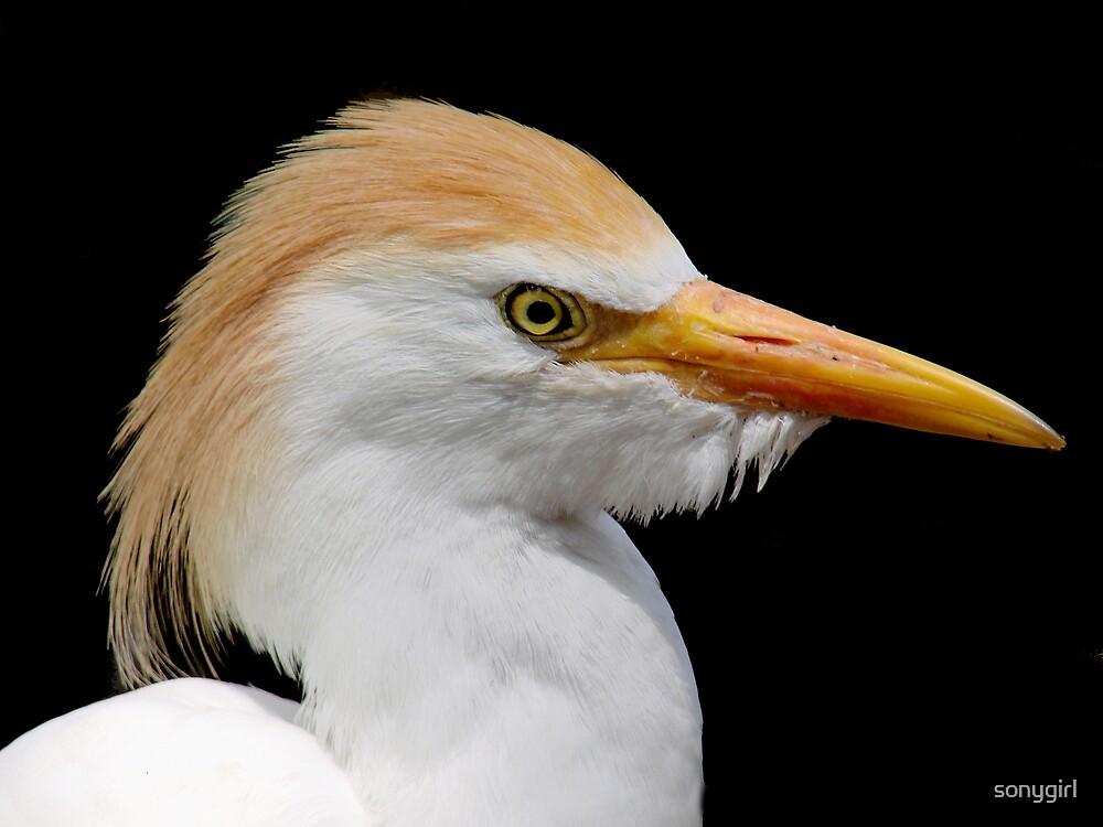 heron on black by sonygirl