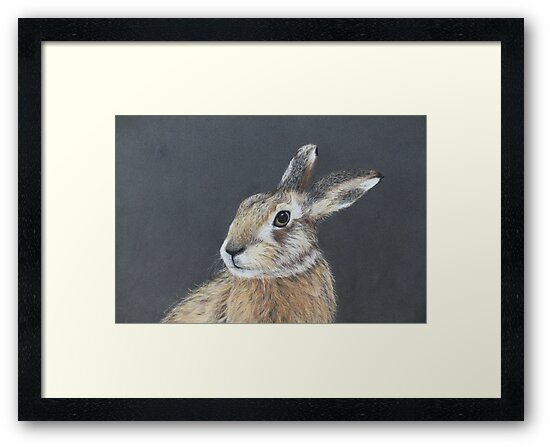 the hares stare by diane nicholson