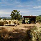 Farm Yard by Joe Mortelliti