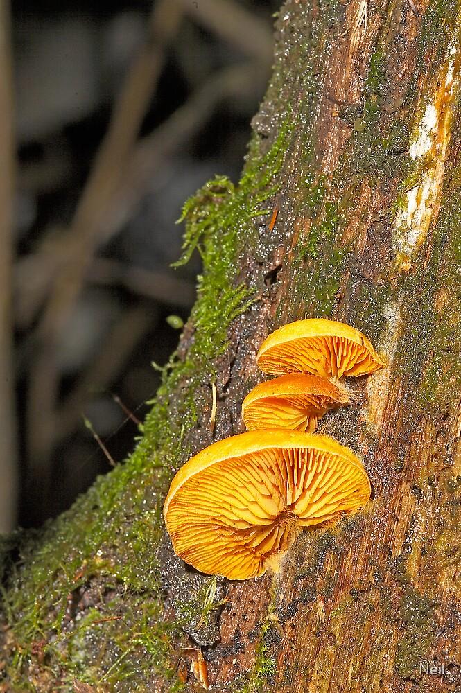 fungi 6 by Neil