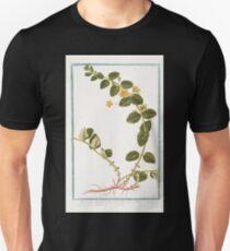 Hortus Romanus Lysimachia humifusa folio rotundiore flore luteo Corneille Loosestrife Unisex T-Shirt