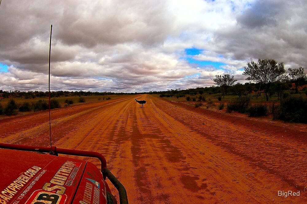 Outback Emu by BigRed