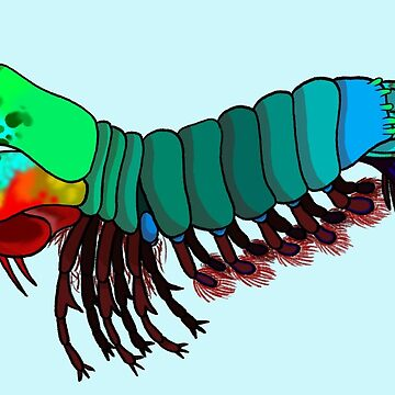 Peacock Mantis Shrimp by LeaGerard