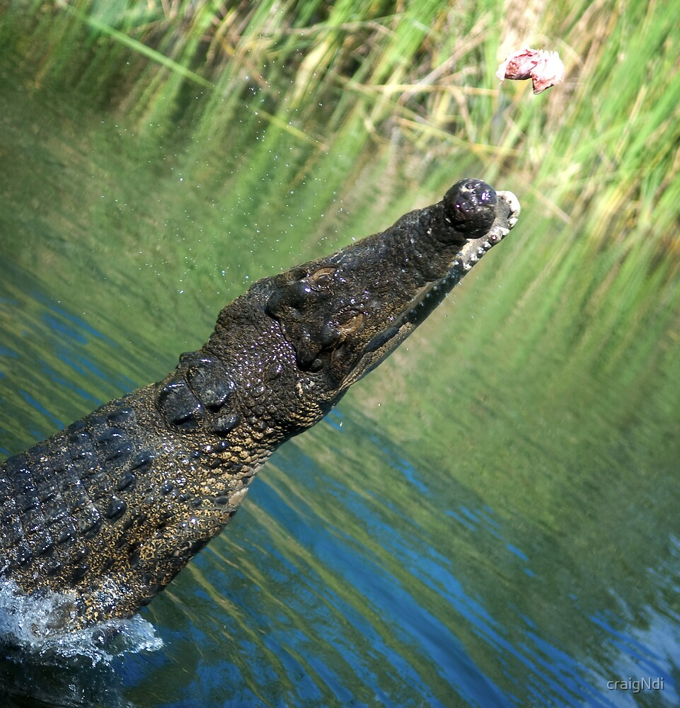 Croc jump by craigNdi
