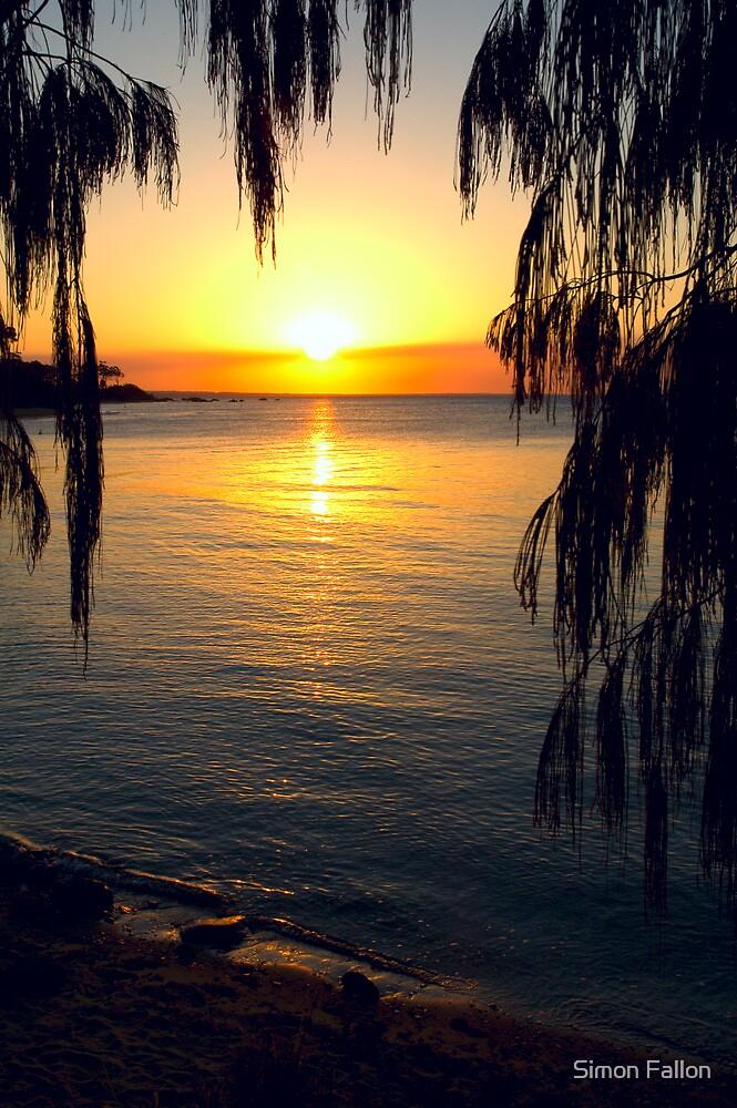 Sheoak Sunset by Simon Fallon