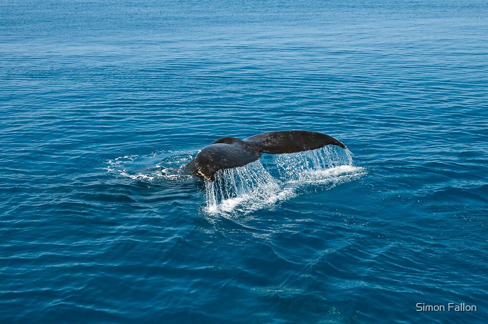 Whale Tail by Simon Fallon