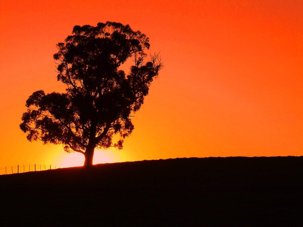 sunset by aersh