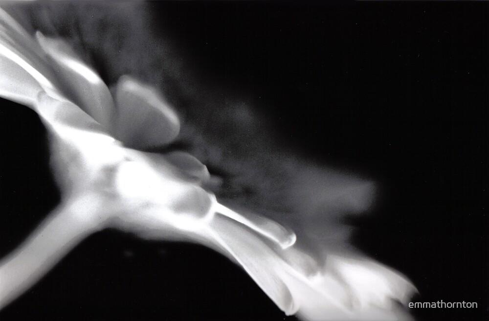 Ghostly Gerbera by emmathornton