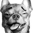 Derp Chihuahua by fluffymafi