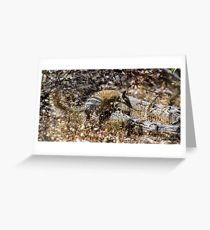 The Australian Numbat number two Greeting Card