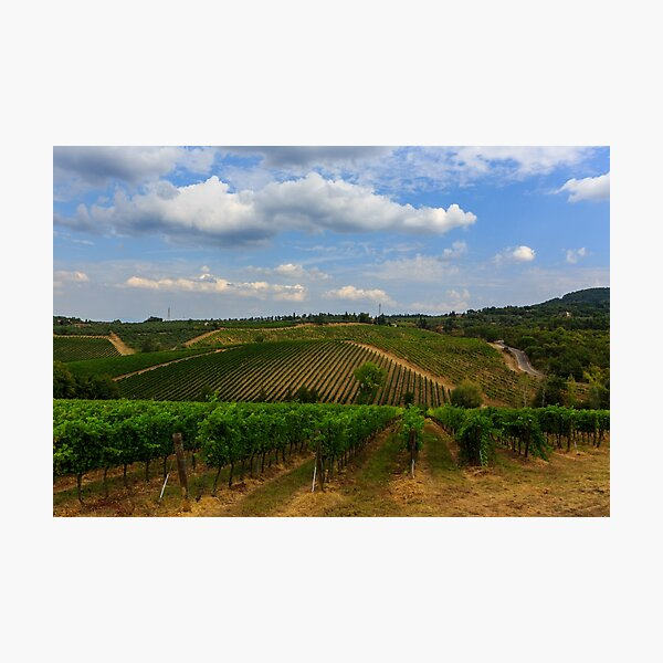 Tuscan veynards Photographic Print