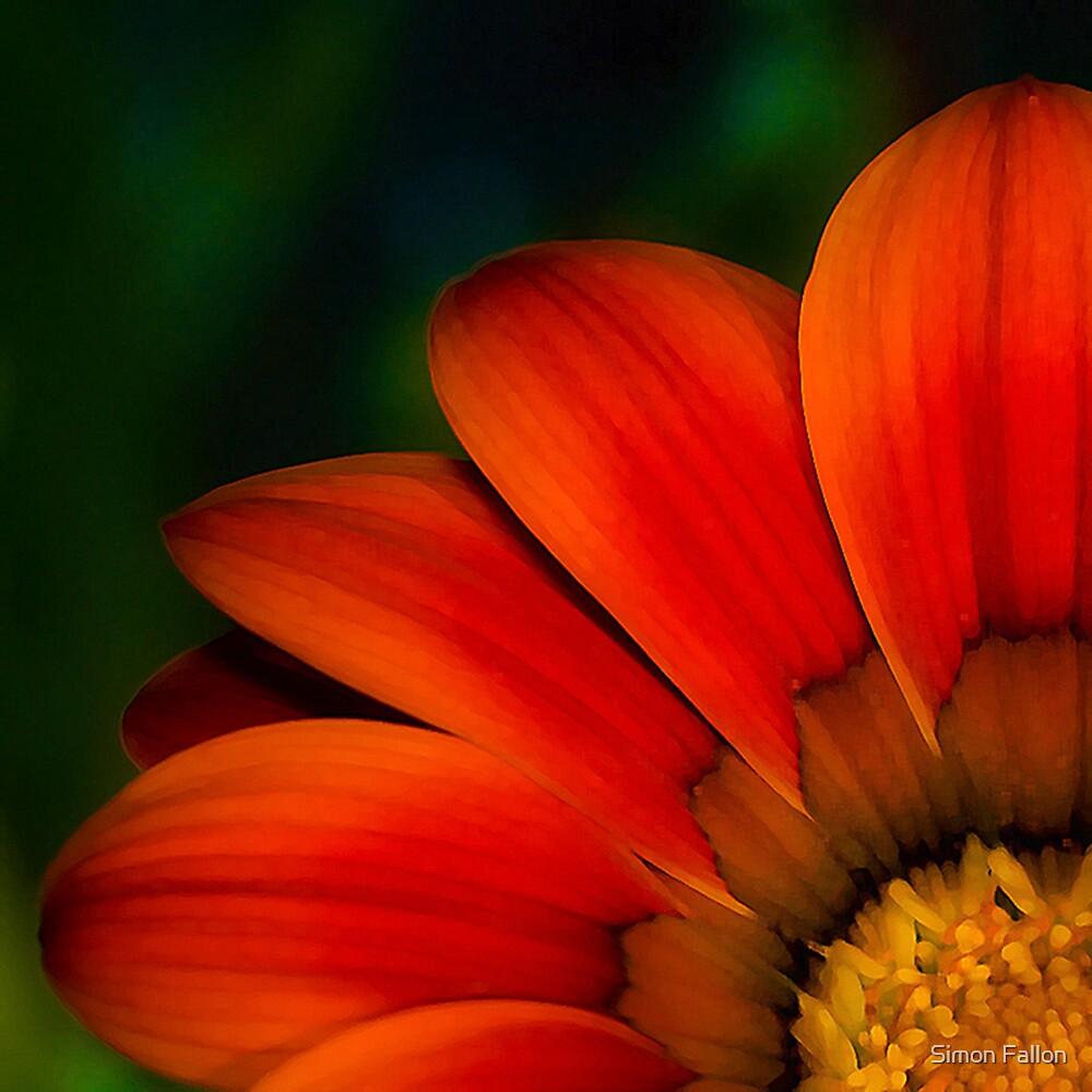 Red Petals by Simon Fallon