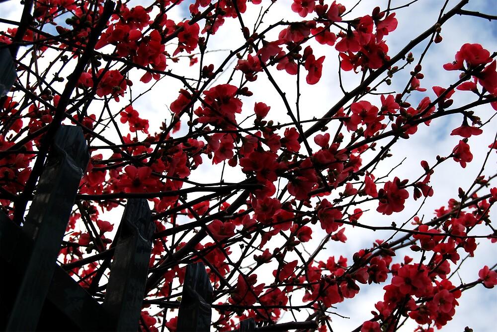 blossoms by Princessbren2006