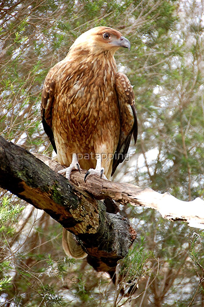 Bird of Prey Gorge Wildlife park,Sth. Aust. by patapping