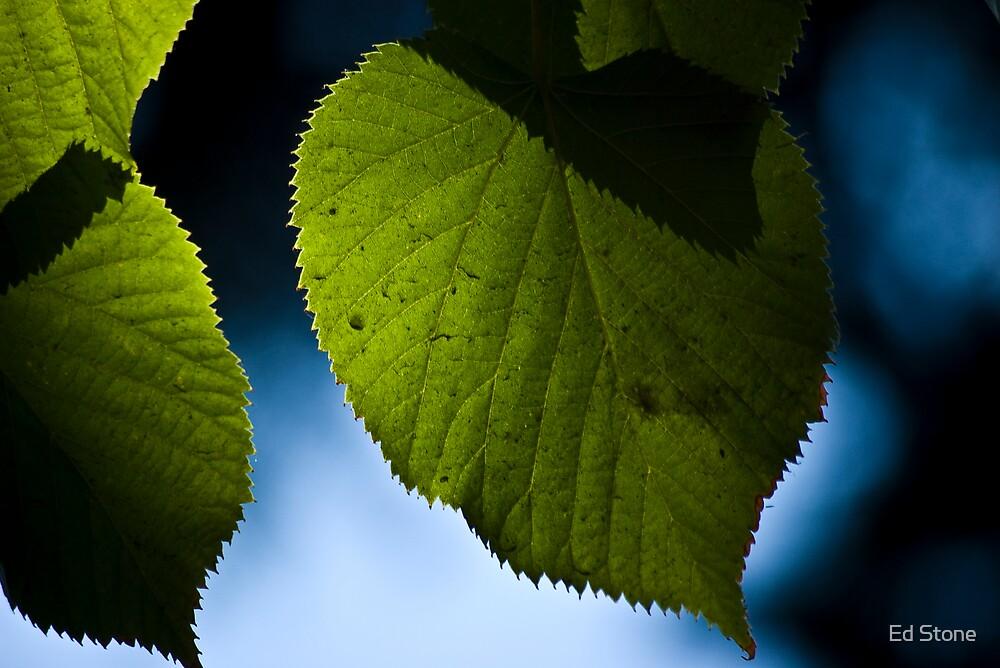 A Leaf by Ed Stone