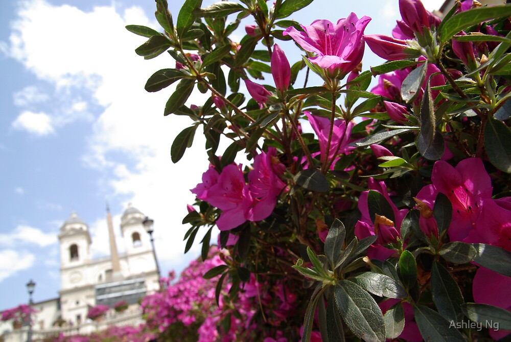 Flowers at the Spanish Steps by Ashley Ng