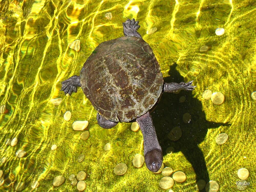 Wishing Turtle by Kewe