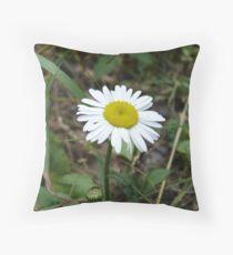 ox-eye daisy Throw Pillow