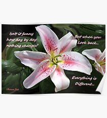 Stargazer Lily with a Question Poster