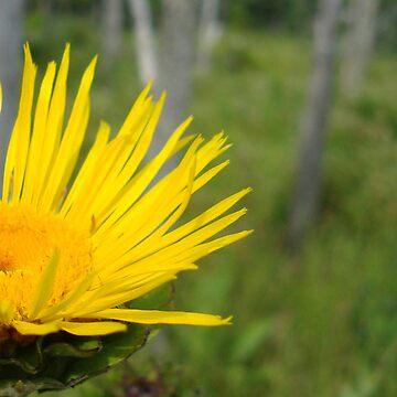 Wild Sunflower by blakdeaconfilms