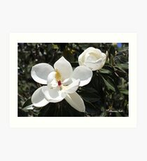 High in a Magnolia Tree ~ Blooms Art Print