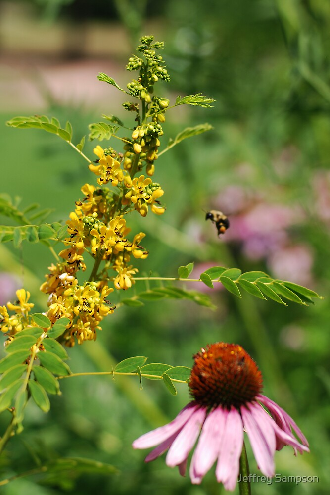 The Bumble Bee by Jeffrey Sampson