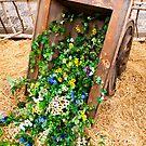 Spring Cart by Rae Tucker