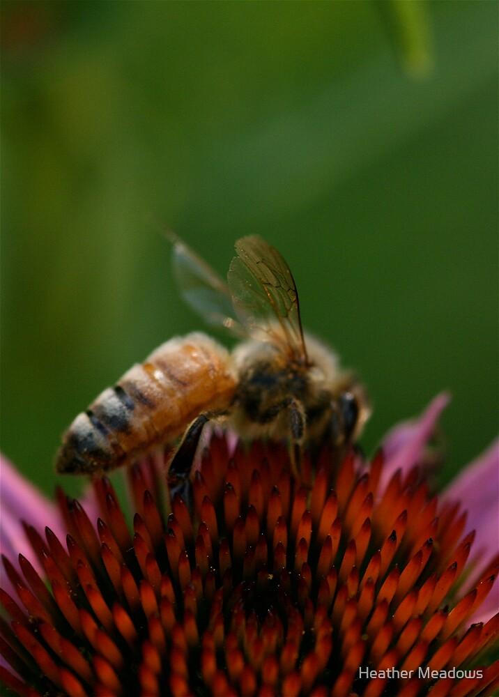Bee Flower by Heather Meadows