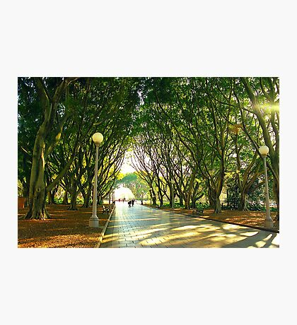 Hyde Park, Sydney Photographic Print